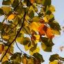 Groen-gele beukebladeren